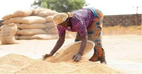 Supply Ghana Rice To Schools Or Face Sanctions - NAFCO